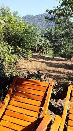 Khao Sok Paradise Resort : Tree Hut - Terasse mit Blick in den Dschungel