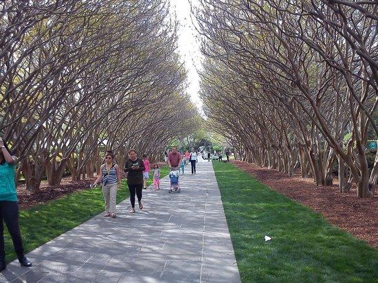 Dallas Arboretum & Botanical Gardens: blossom