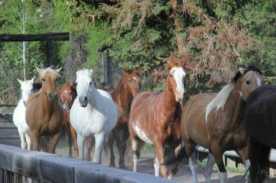 Spotted Horse Ranch: Horses leaving the corral
