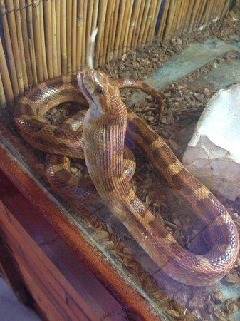 Feeding time - Picture of Aquaworld Aquarium & Reptile