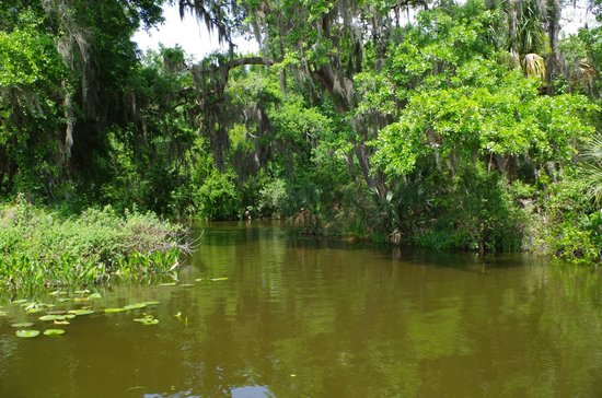 Lake Dora: Dora Canal Bayou