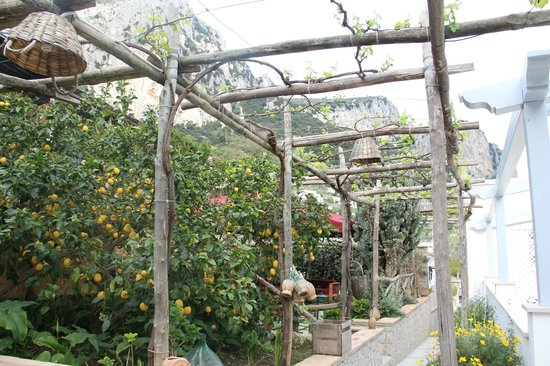 Capri Wine Hotel: Garden sitting area