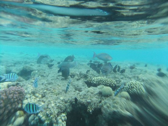 Miramar Resort Taba Heights: Site de snorkeling