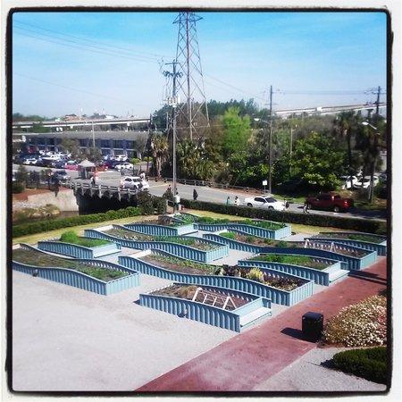 Savannah College of Art and Design : Community Garden Love it