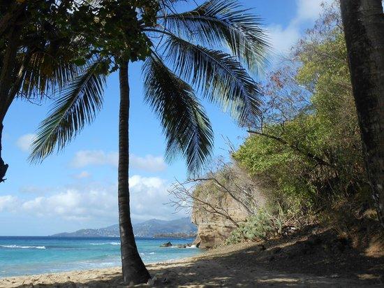 Grenadian by Rex Resorts: plam tree at beach