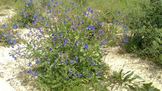 Quinta dos Caracois: Pretty spring flowers
