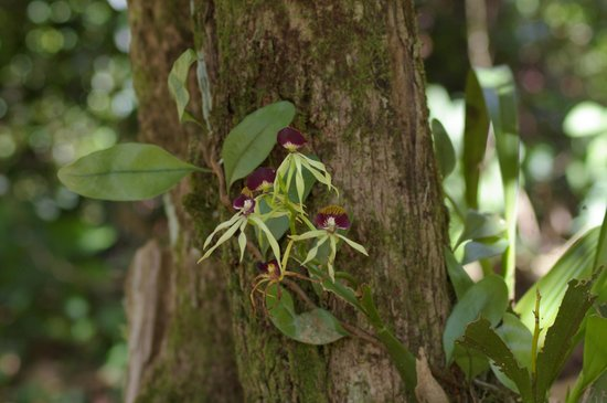 Blue Hole National Park: ORCHIDEE