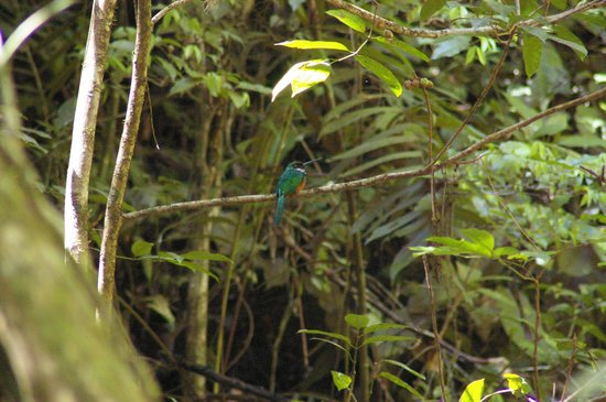 Blue Hole National Park: BIRD