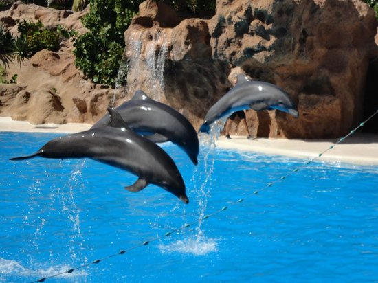 Loro Parque: Шоу дельфинов
