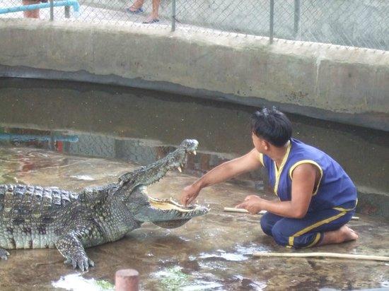 Samui Crocodile Farm : Show