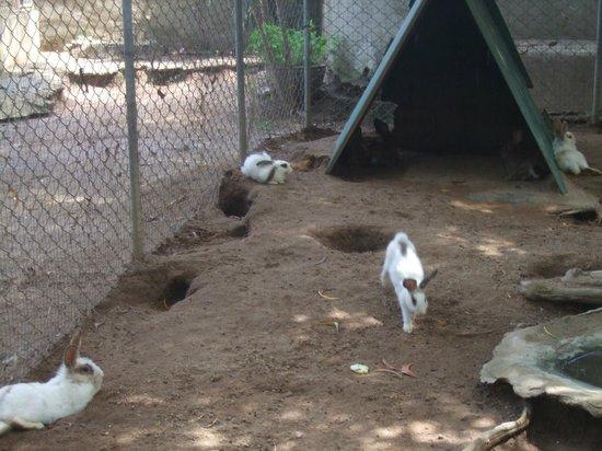 Samui Crocodile Farm : Hasenstall
