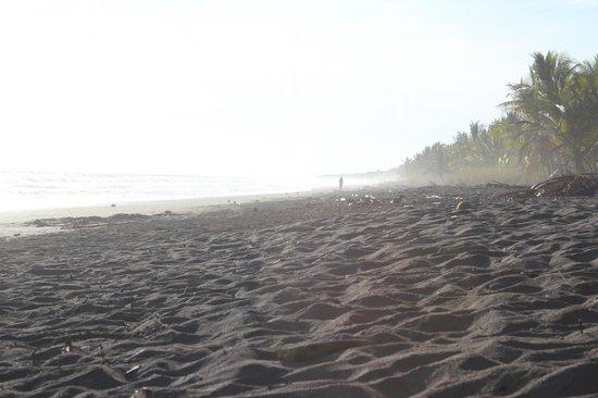 Hotel La Isla: Beach - pretty, but it's empty for a reason
