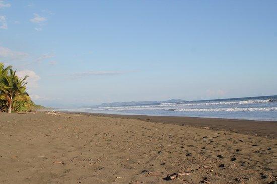 Hotel La Isla: Beach - it's empty for a reason