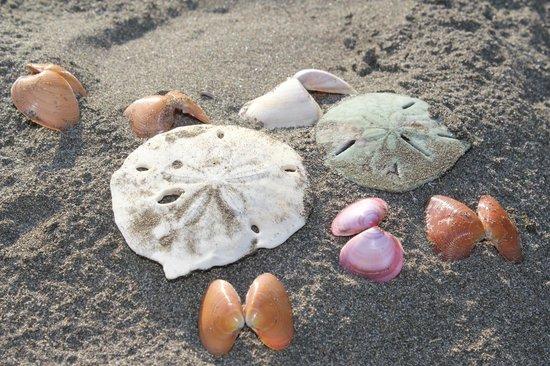 Hotel La Isla: Shells