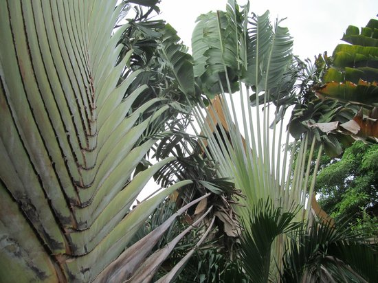Thai House Beach Resort: За пальмами моря не видно.