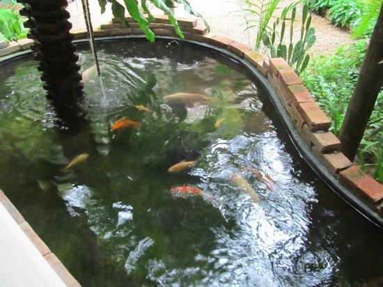 Thai House Beach Resort : Пруд с рыбками.