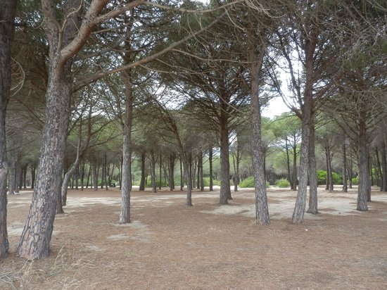 Agriturismo Piperedda : la pineta