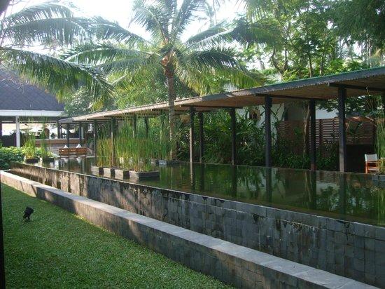 Nikki Beach Koh Samui: Eingangsbereich