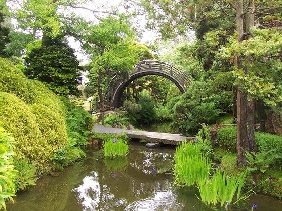 Japanese Tea Garden : Beautiful arch bridge