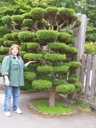 Japanese Tea Garden: Careful tending