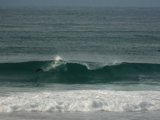 Ocean View Hotel: Watching the dolphins playing in the surf