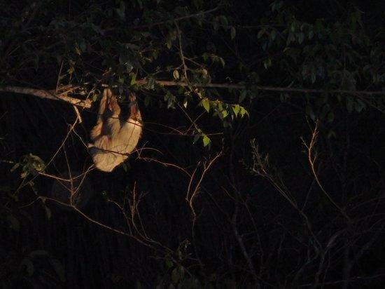 Gamboa Rainforest Resort: sloth