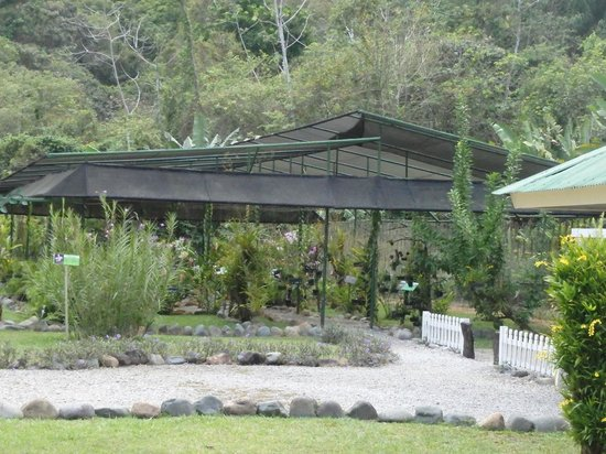 Gamboa Rainforest Resort: area