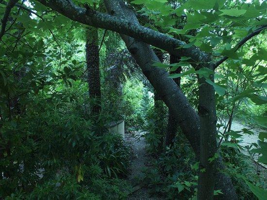 Magical Manderley: The Garden