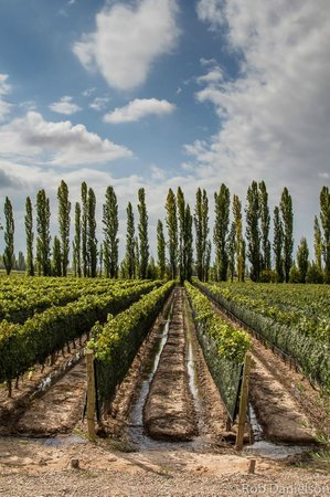 Gustavo Delucchi Wine Tours: Where it all starts