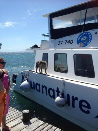 The Aquanature Boat and Puzzi the dog who just loves swimming