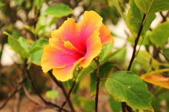 Coco Plum Island Resort : Beautiful Flowers!
