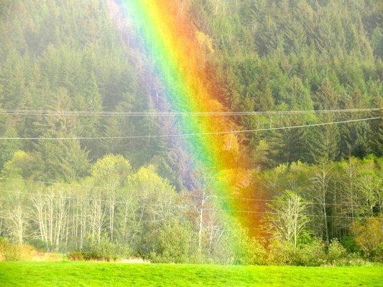WildSpring Guest Habitat: rainbow