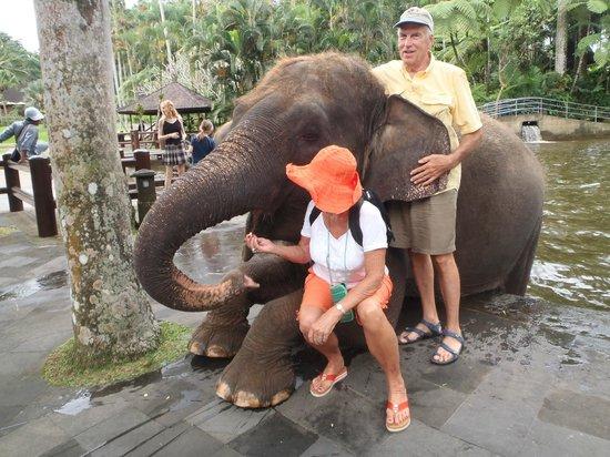 Mason Elephant Lodge : Elephant Feeding & Hugs