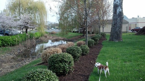 Residence Inn Salisbury : Exterior landscaping