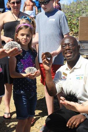 Bernard's Tours: Sea urchins in St. Maarten