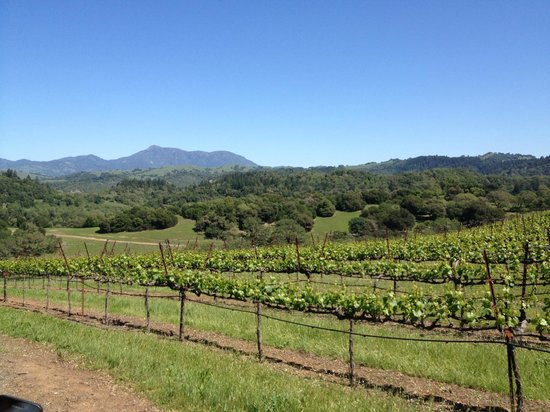 Chalk Hill Winery : What a view