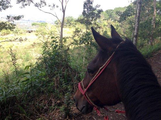 Hacienda Monte Claro: Imperial