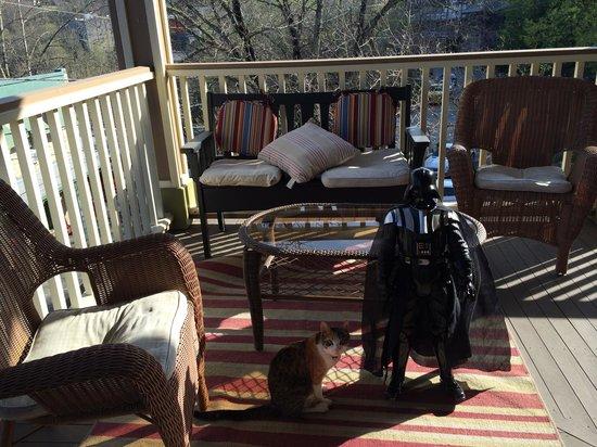 All Seasons Inn : Lil Vader has a favorite cat, very sweet!