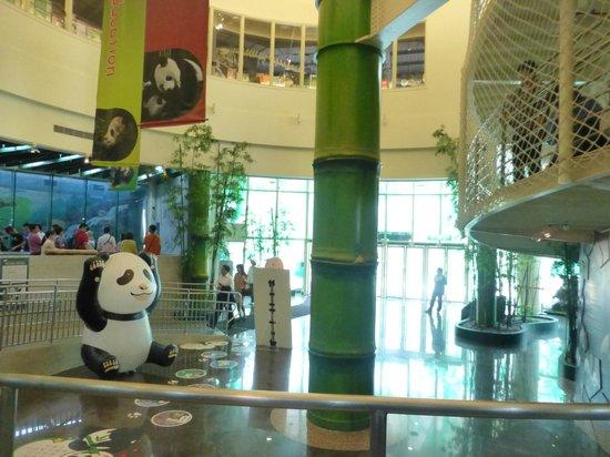 Panda House inside the circular panda house - picture of taipei zoo, taipei
