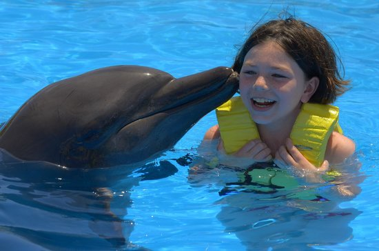 Barcelo Maya Palace: Great Dolphin Experience for all ages (even parents)