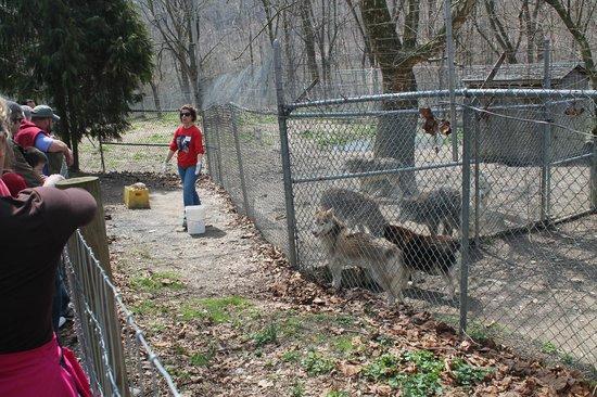 Wolf Sanctuary of PA: Wolf Tour