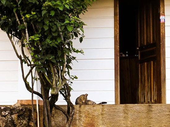 The Colibri Hill Resort : Friendly kitty