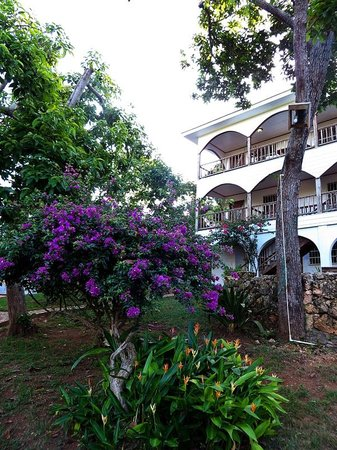 The Colibri Hill Resort: Lots of flowers