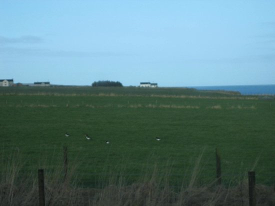 Natural Retreats John O'Groats: A view from our cabin, #22