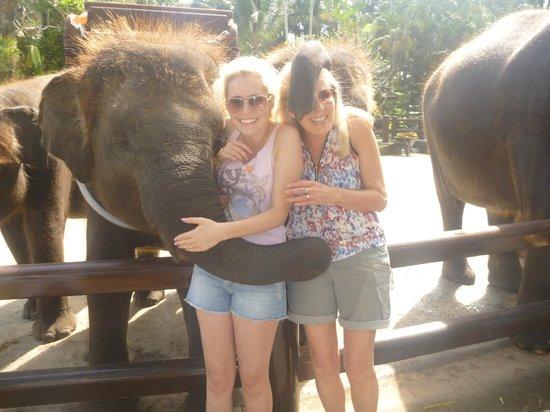 Mason Elephant Lodge : Fabulous experience
