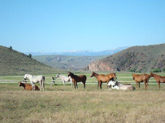Bitterroot Ranch : Happy horses