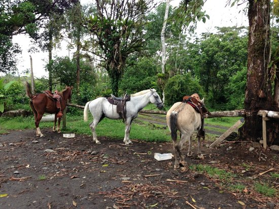 Blue River Resort & Hot Springs: horses