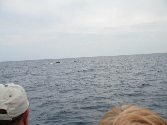 Kauai Sea Rider Snorkel & Whale Watching Tours: Momma & baby