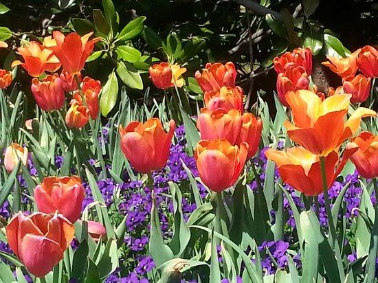 Arboretum et jardin botanique de Dallas : Dallas Arboretum & Botanical Gardens