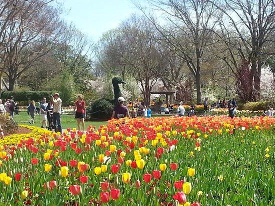 Dallas Arboretum Botanical Gardens Picture Of Dallas Arboretum Botanical Gardens Dallas